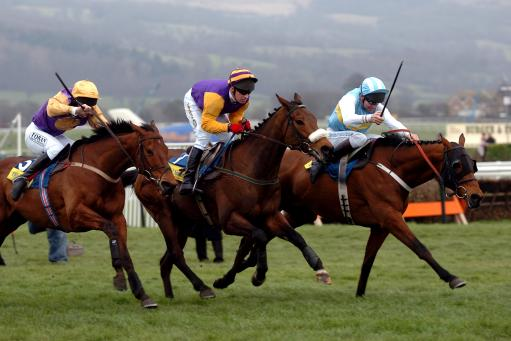 2005 champion hurdle betting solitaire scleractinian corals betting